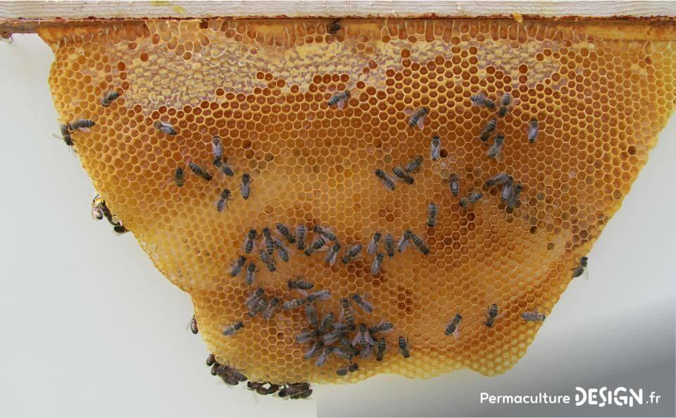L?apiculture naturelle et ses bienfaits pour agir contre le déclin des populations d?abeilles.