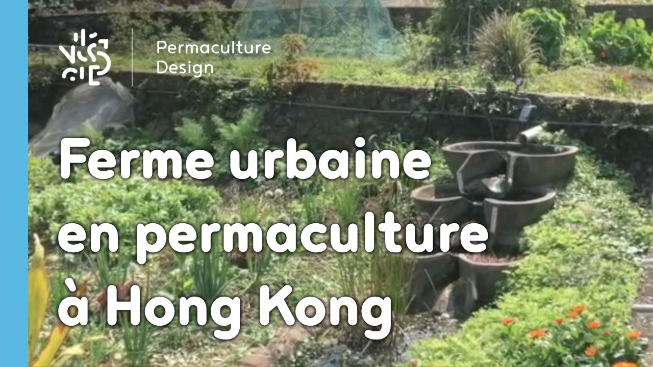 ferme urbaine en permaculture hong kong. Black Bedroom Furniture Sets. Home Design Ideas