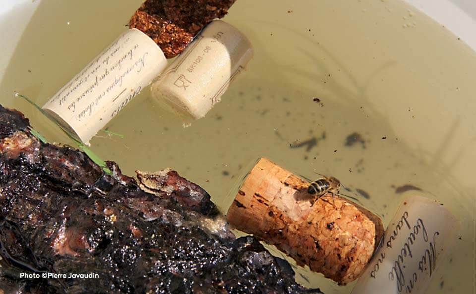 Installer une ruche dans son jardin permet de sauvegarder les abeilles et produire du miel.