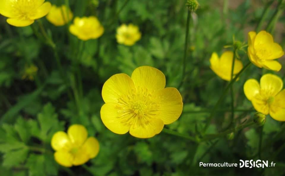 Observer les plantes bio-indicatrices donne de nombreux renseignements sur la composition et l'état des sols dans lesquels elles poussent.