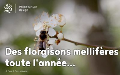 Les meilleures plantes mellifères pour nourrir vos abeilles toute l'année !