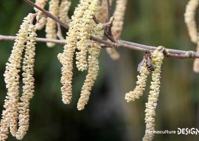 plantes-mellifere-nourrir-abeille-formation-permaculture-design_02