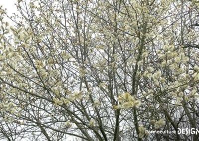 plantes-mellifere-nourrir-abeille-formation-permaculture-design_06