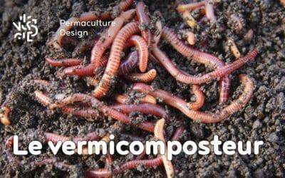 Le vermicomposteur : une boîte à vers pour faire un compost de qualité