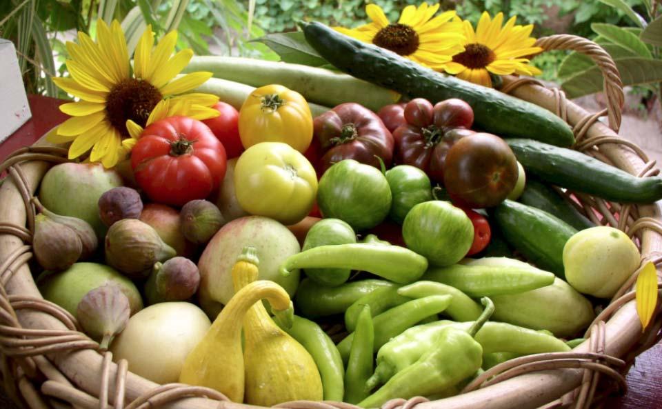 Avec sa petite ferme urbaine à Pasadena en Californie, la famille Dervaes développe son autonomie alimentaire et tend vers l'autosuffisance.