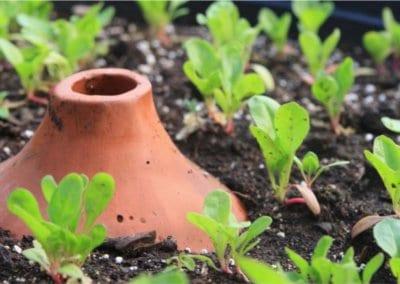 ferme-urbaine-production-nourriture-autonomie-alimentaire-autosuffisance-formation-permaculture-design_07