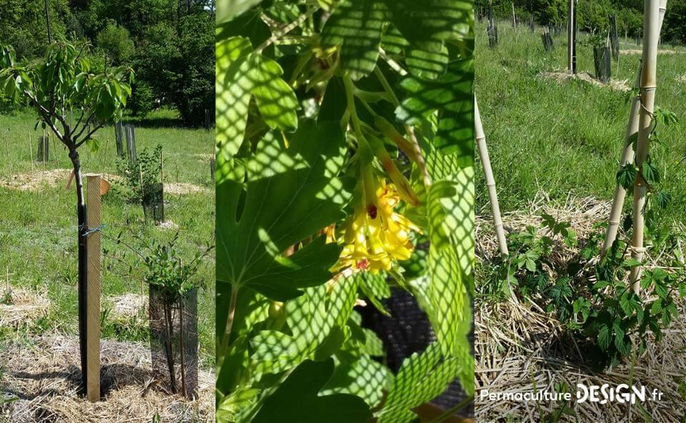 Suivi de la création d'un jardin-forêt comestible en permaculture au sein de la communauté du projet TERA.