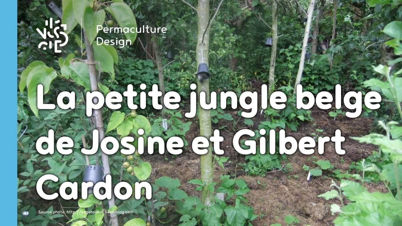 Un jardin foret en permaculture en ville agroecologie for Jardin foret