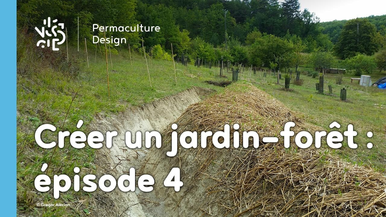 cr er un jardin for t en permaculture pisode 4. Black Bedroom Furniture Sets. Home Design Ideas