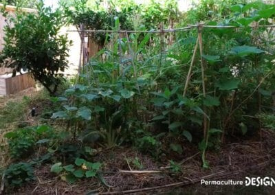 jardin-potager-transformation-temoignage-video-01-formation-permaculture-design_18