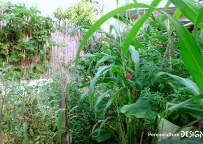 jardin-potager-transformation-temoignage-video-01-formation-permaculture-design_25