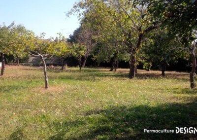 verger-jardin-foret-abondance-autonomie-alimentaire-formation-permaculture-design_03