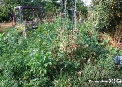 verger-jardin-foret-abondance-autonomie-alimentaire-formation-permaculture-design_12
