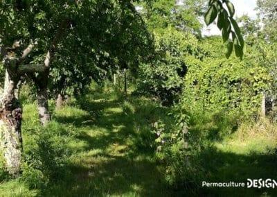 verger-jardin-foret-abondance-autonomie-alimentaire-formation-permaculture-design_13