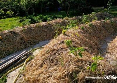 verger-jardin-foret-abondance-autonomie-alimentaire-formation-permaculture-design_15
