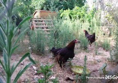 verger-jardin-foret-abondance-autonomie-alimentaire-formation-permaculture-design_21