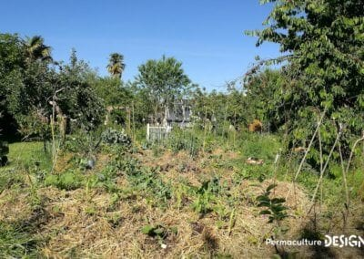 verger-jardin-foret-abondance-autonomie-alimentaire-formation-permaculture-design_22