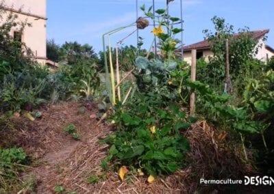 verger-jardin-foret-abondance-autonomie-alimentaire-formation-permaculture-design_26