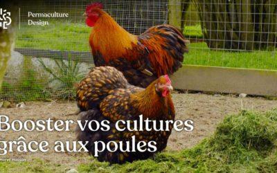 Du poulailler au jardin potager : valorisez simplement les productions de vos poules.