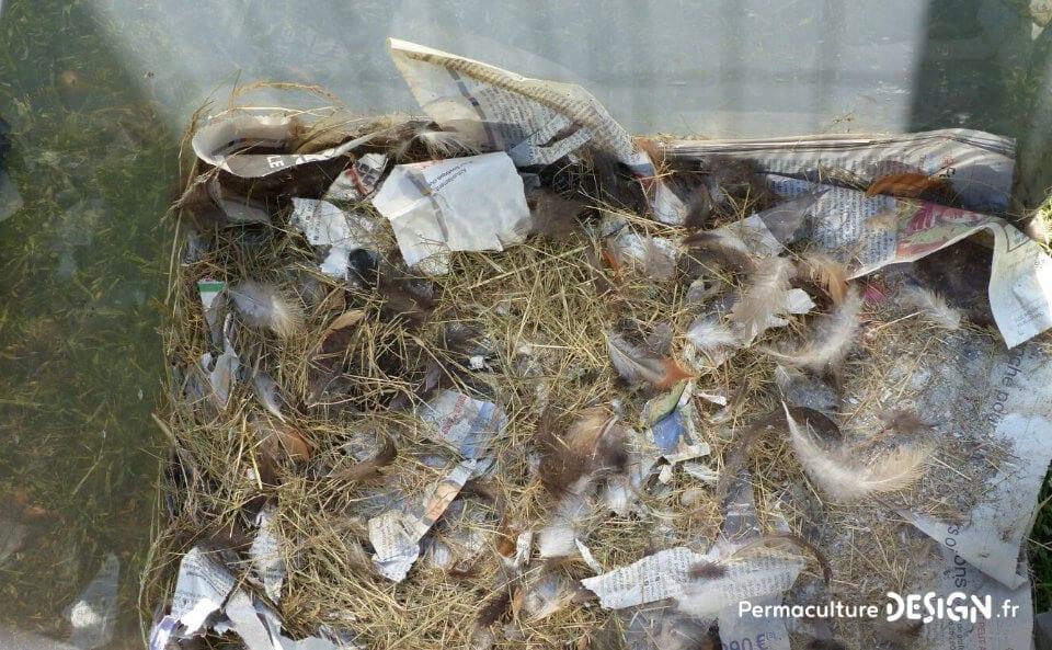 Avoir un élevage de poules permet de valoriser diverses productions au jardin potager pour booster vos cultures.