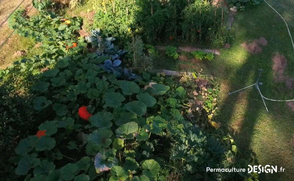 Membre de notre formation en ligne « Invitez la permaculture dans votre jardin », Mathilde a appliqué la méthodologie de design à son projet de vie global, lui permettant de réaliser, à son rythme, son changement de vie.