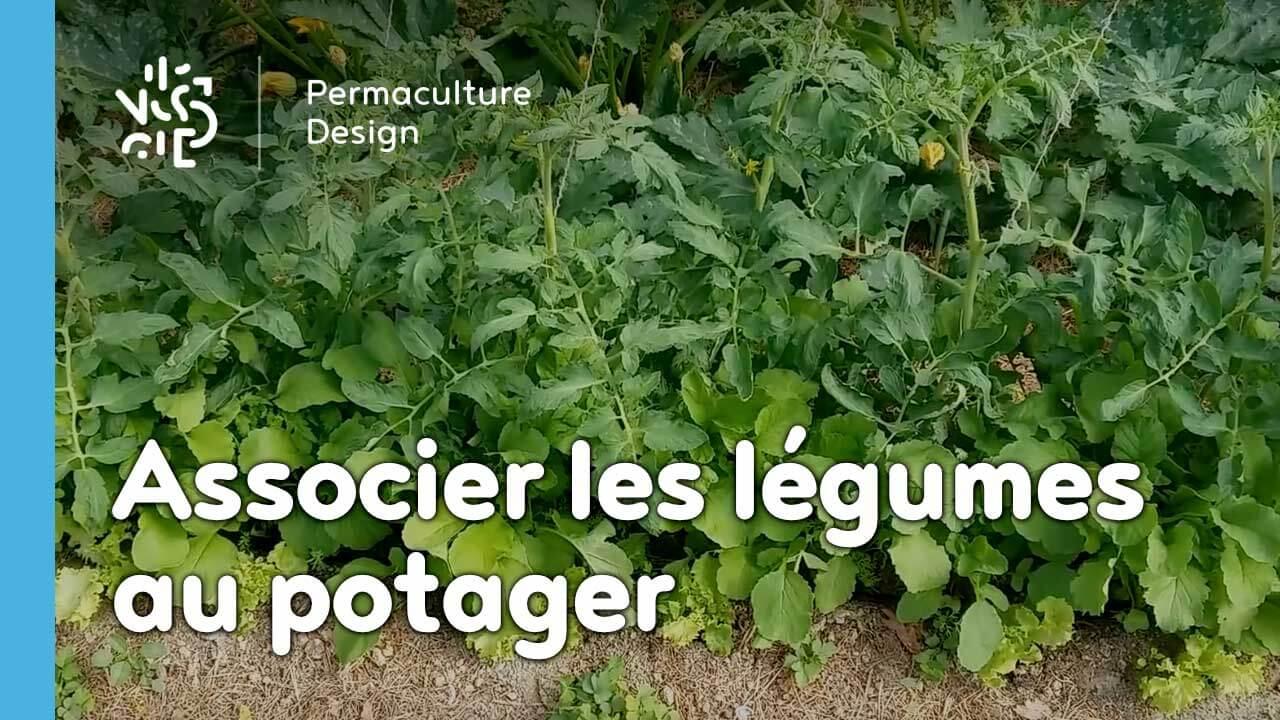 Les associations de légumes dans un potager en permaculture.