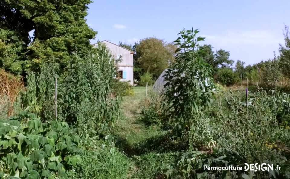 Le jardin en permaculture d'Olivier lui permet d'observer la nature, d'apprendre, d'expérimenter pour ensuite diffuser son savoir à son entourage.