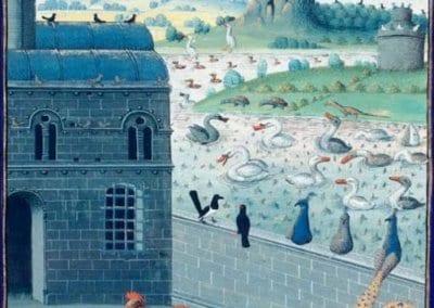 poule-nature-histoire−formation−permaculture−design-12