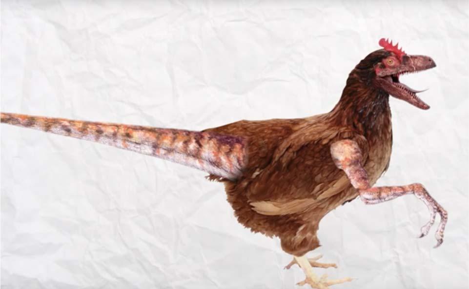 La vraie nature de la poule origines et histoire de son levage - Image d une poule ...