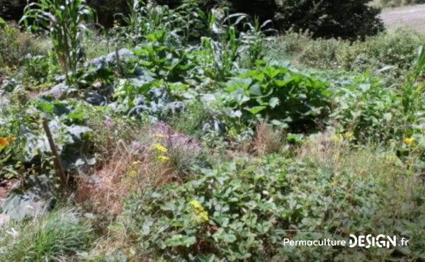 Romain observe et expérimente la permaculture dans son jardin: potager, buttes, terrasses, mares, arbres fruitiers, poules, serre souterraine, tout est réuni pour avoir de belles récoltes.