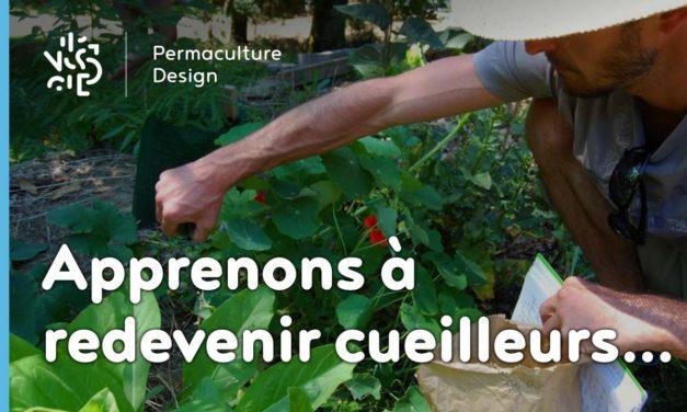 Redécouvrons la cueillette des plantes sauvages comestibles…