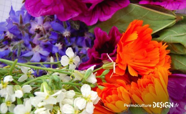En permaculture, on recommande la cueillette de plantes sauvages comestibles  pour une alimentation saine et
