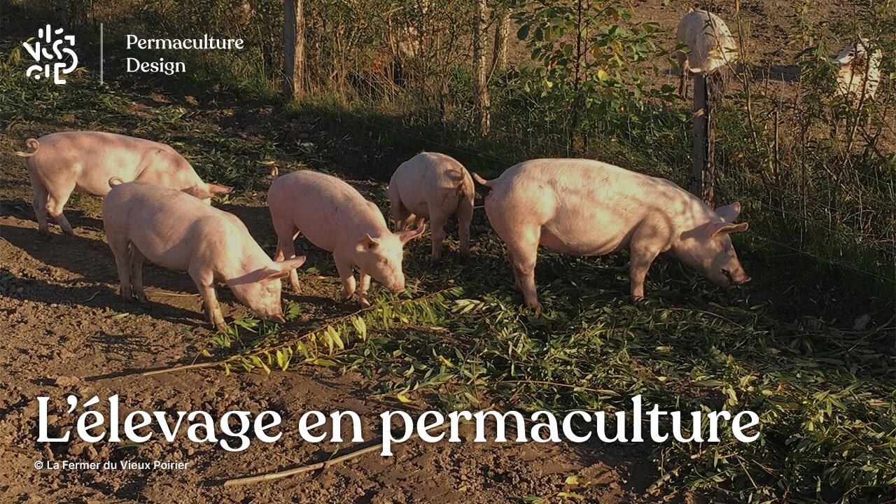 L'élevage en permaculture sur une microferme agroécologique