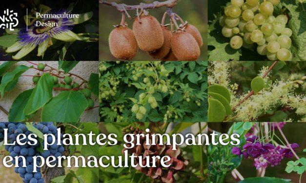 Les plantes grimpantes en permaculture : le guide complet