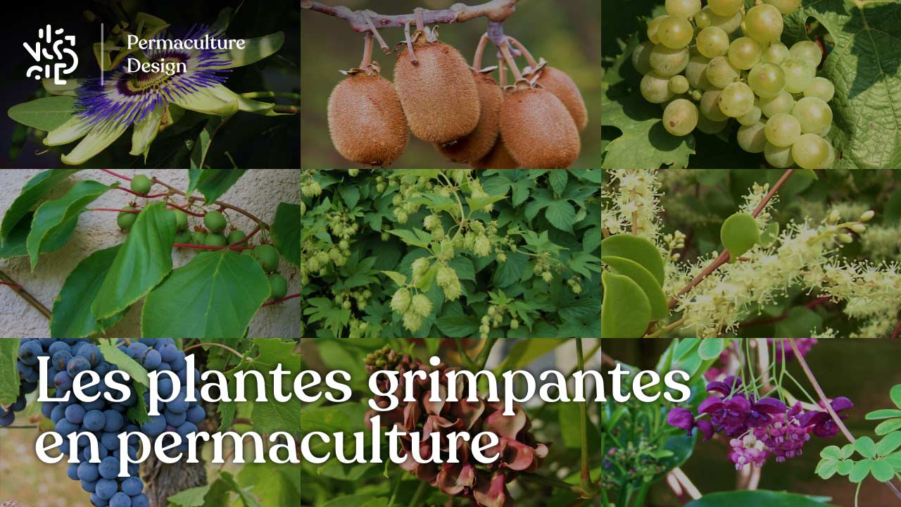 Fabriquer Treillis Bois Pour Plantes Grimpantes les plantes grimpantes en permaculture : le guide complet