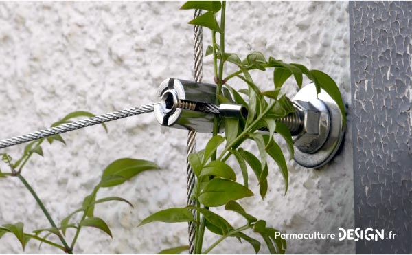 Les plantes grimpantes sont très intéressantes dans un jardin en permaculture.