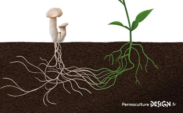 La culture sur butte est une technique de Permaculture avec des avantages et des inconvénients.
