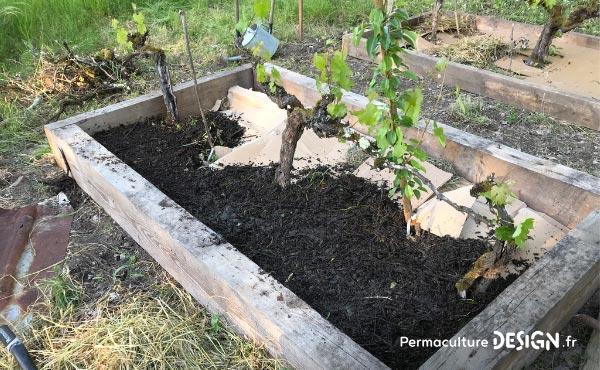 La culture en lasagne est une technique de Permaculture visant à créer des buttes de culture temporaires très fertiles. Un jardin en lasagne ou potager en lasagne se réalise rapidement et facilement si on a les matières organiques à disposition.