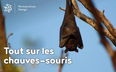 Tout sur la chauve-souris, de la pipistrelle à la noctule : particularités, cycle de vie, nourriture…