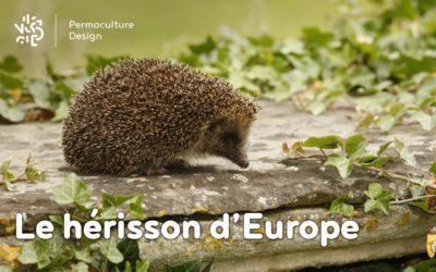 Tout savoir sur le hérisson d'Europe au jardin