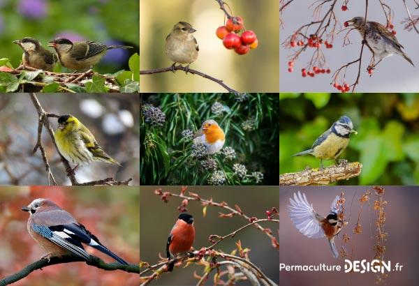 En permaculture, la haie qu'elle soit vive, champêtre, bocagère ou autre est considérée comme un écosystème à part entière nécessaire à la biodiversité.