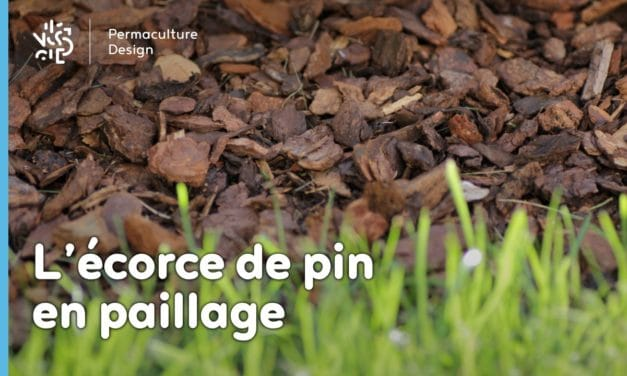 Les écorces de pin en paillage