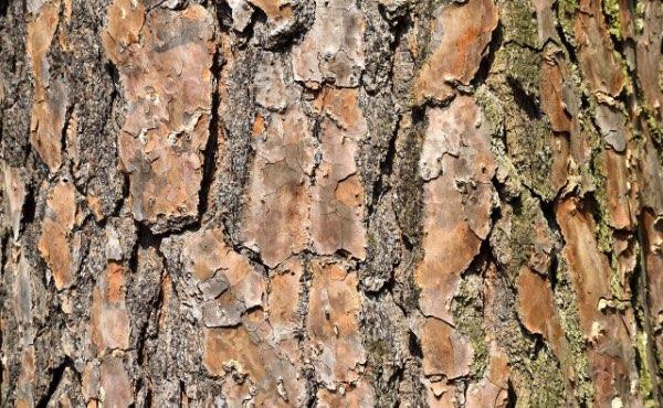 L'écorce de bois et plus particulièrement l'écorce de pin est un paillage très répandu pouvant avoir son utilité au jardin en permaculture.