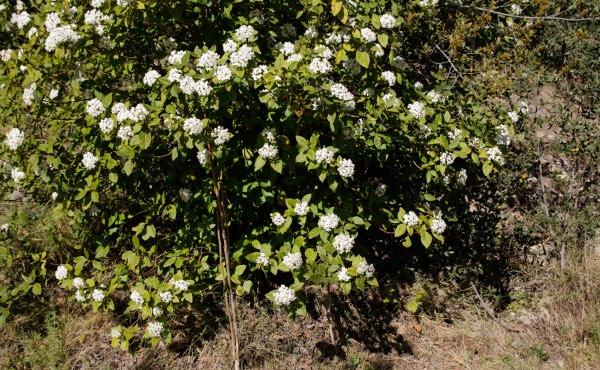 Découvrez comment composer une haie fleurie pour des floraisons toute l'année, avec des exemples d'arbustes de haie fleurie persistants et caducs, selon vos besoins et envies !