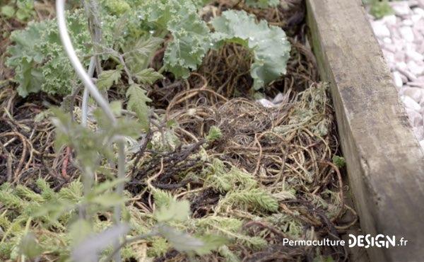 Un ancien potager traditionnel transformé en foret jardin en permaculture grâce aux guildes autour des arbres fruitiers.