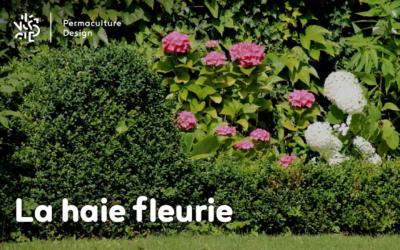 La haie fleurie au jardin