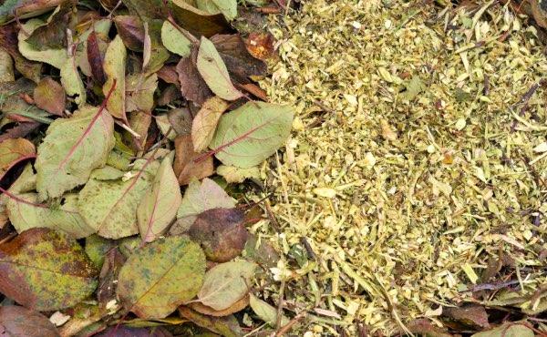 Le bois rameau fragmenté ou BRF est un paillage très spécifique et intéressant au jardin en permaculture pour régénérer le sol, sa fertilité et favoriser la vie du sol.