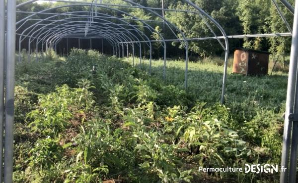 Le compost réalisé sur place par un maître composteur profite aux activités de maraîchage et de forêt comestible.