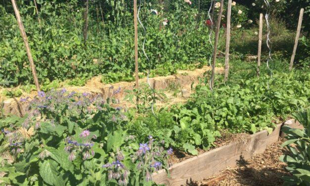 La permaculture au jardin potager : le guide complet