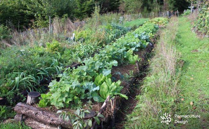 Exemple de buttes de culture au potager en permaculture de la ferme expérimentale de la Goursaline.